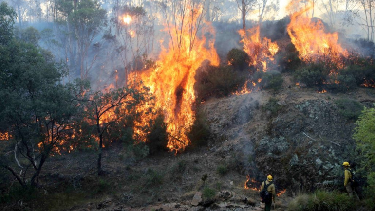 Berkshire Freemasons support the victims of Australian bush fires